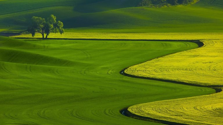 Green Fields Nature Landscape Wallpaper 1920x1080 768x432