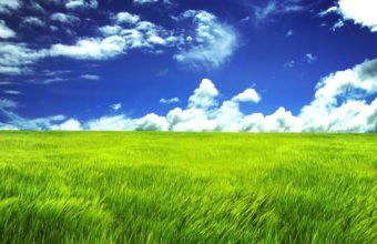 Green Grassland Wallpaper 2560x1600 340x220
