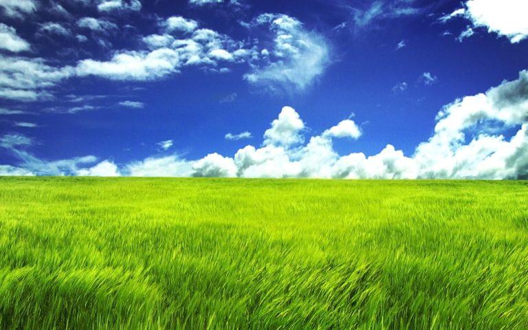 Green Grassland Wallpaper 2560x1600 768x480