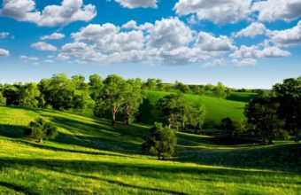 Green Landscape With Trees Wallpaper 1680x1050 340x220