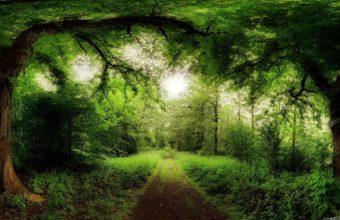 Green Landscapes Nature Sun Trees Wallpaper 1920x1200 340x220