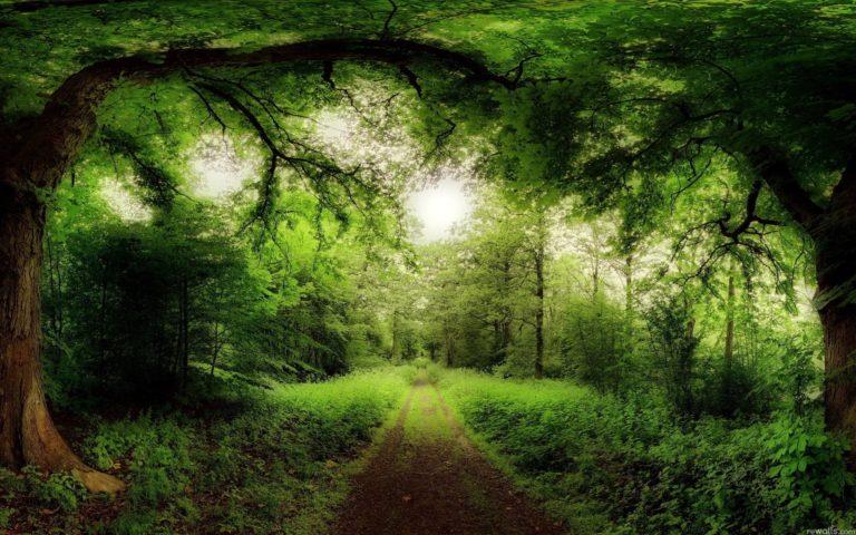 Green Landscapes Nature Sun Trees Wallpaper 1920x1200 768x480