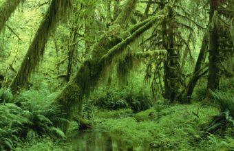 Green Landscapes Nature Trees Jungle Wallpaper 1920x1200 340x220