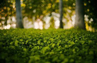 Green Nature Grass Bokeh Blurred Wallpaper 1920x1200 340x220