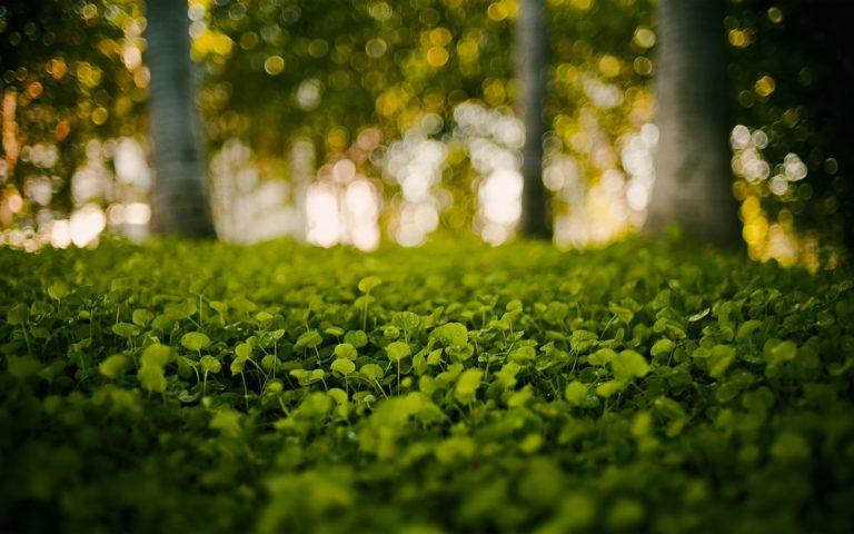 Green Nature Grass Bokeh Blurred Wallpaper 1920x1200 768x480