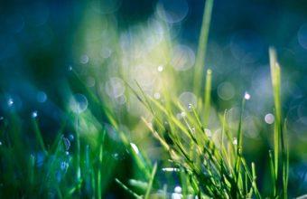 Green Nature Grass Heaven Bokeh Wallpaper 1920x1200 340x220