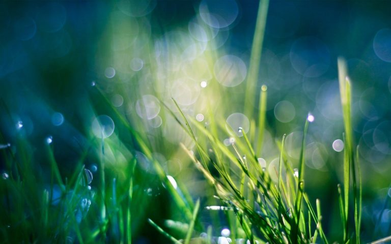 Green Nature Grass Heaven Bokeh Wallpaper 1920x1200 768x480
