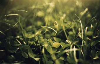 Green Nature Leaves Grass Plants Wallpaper 1920x1200 340x220