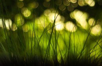 Green Nature Lights Grass Bokeh Wallpaper 1920x1200 340x220