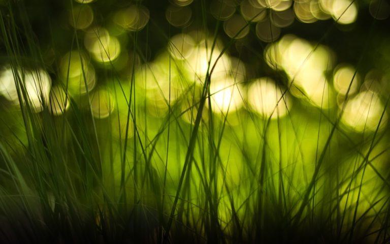 Green Nature Lights Grass Bokeh Wallpaper 1920x1200 768x480
