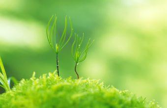 Green Nature Plants Macro Depth Wallpaper 1920x1200 340x220
