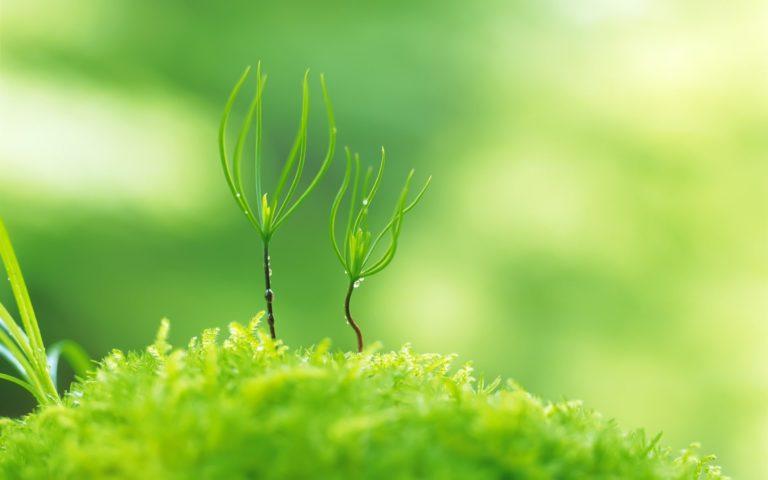Green Nature Plants Macro Depth Wallpaper 1920x1200 768x480