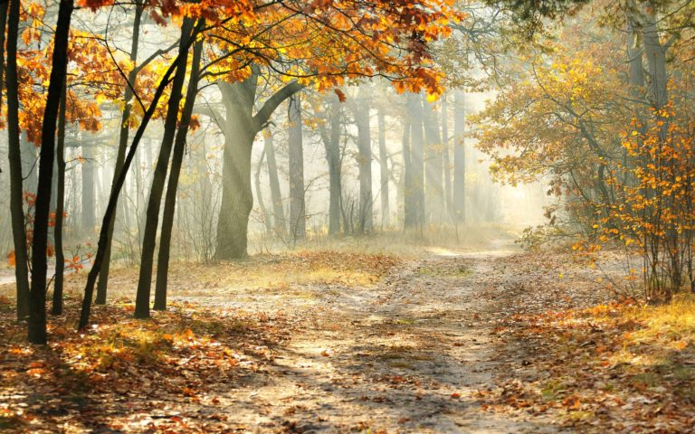 Landscape Morning Nature Beautiful Wallpaper 2560x1600 768x480