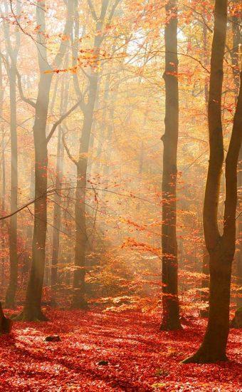 Landscape Phone Wallpaper 162 1080x2340 340x550