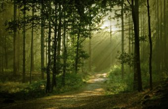 Landscapes Forest Path Sunlight Filtered Wallpaper 1920x1200 340x220