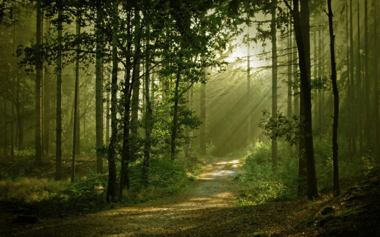 Landscapes Forest Path Sunlight Filtered Wallpaper 1920x1200 768x480