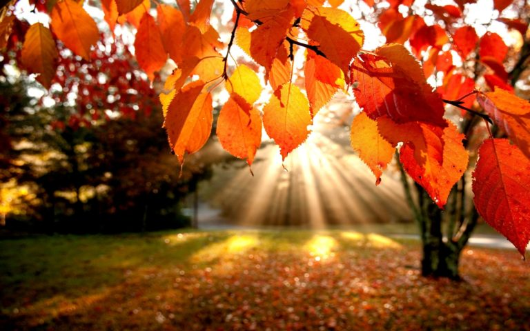 Landscapes Nature Trees Autumn Leaves Wallpaper 1920x1200 768x480