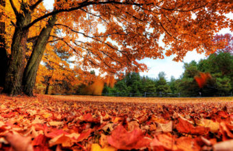 Landscapes Nature Trees Autumn Wallpaper 2560x1600 340x220