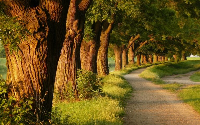 Landscapes Nature Trees Forest Alley Wallpaper 1920x1200 768x480