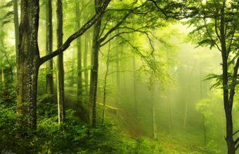 Landscapes Nature Trees Forest Haze Wallpaper 2048x1356 340x220