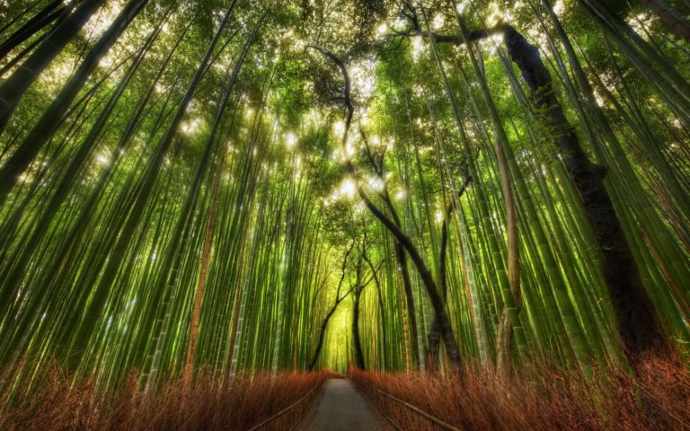 Landscapes Nature Trees Forest Roads Wallpaper 2560x1600 768x480