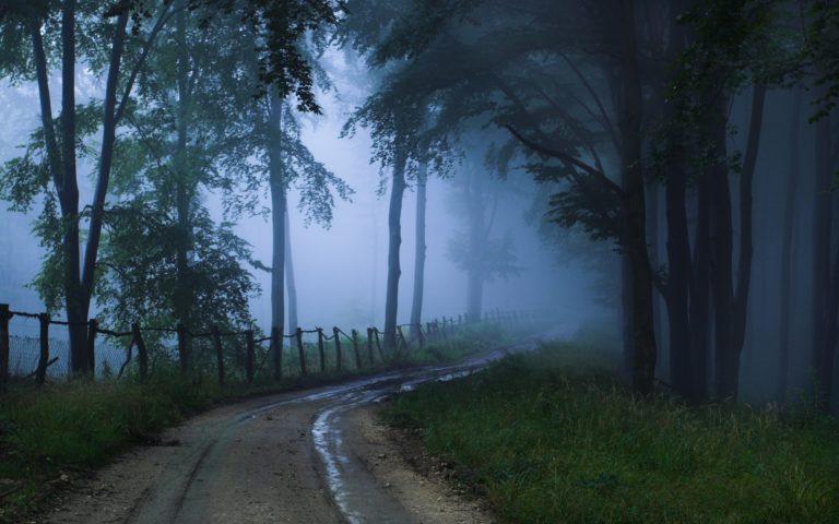 Landscapes Nature Trees Roads Wallpaper 2560x1600 768x480