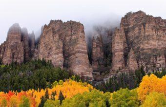 Landscapes Trees Forest Fog Mist Wallpaper 1920x1200 340x220