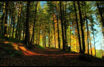Landscapes Trees Forest Path Autumn Wallpaper 1920x1200 340x220