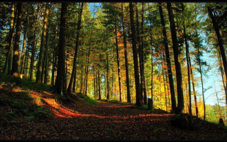 Landscapes Trees Forest Path Autumn Wallpaper 1920x1200 768x480