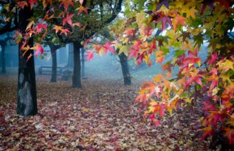 Landscapes Trees Park Bench Autumn Wallpaper 1920x1200 340x220