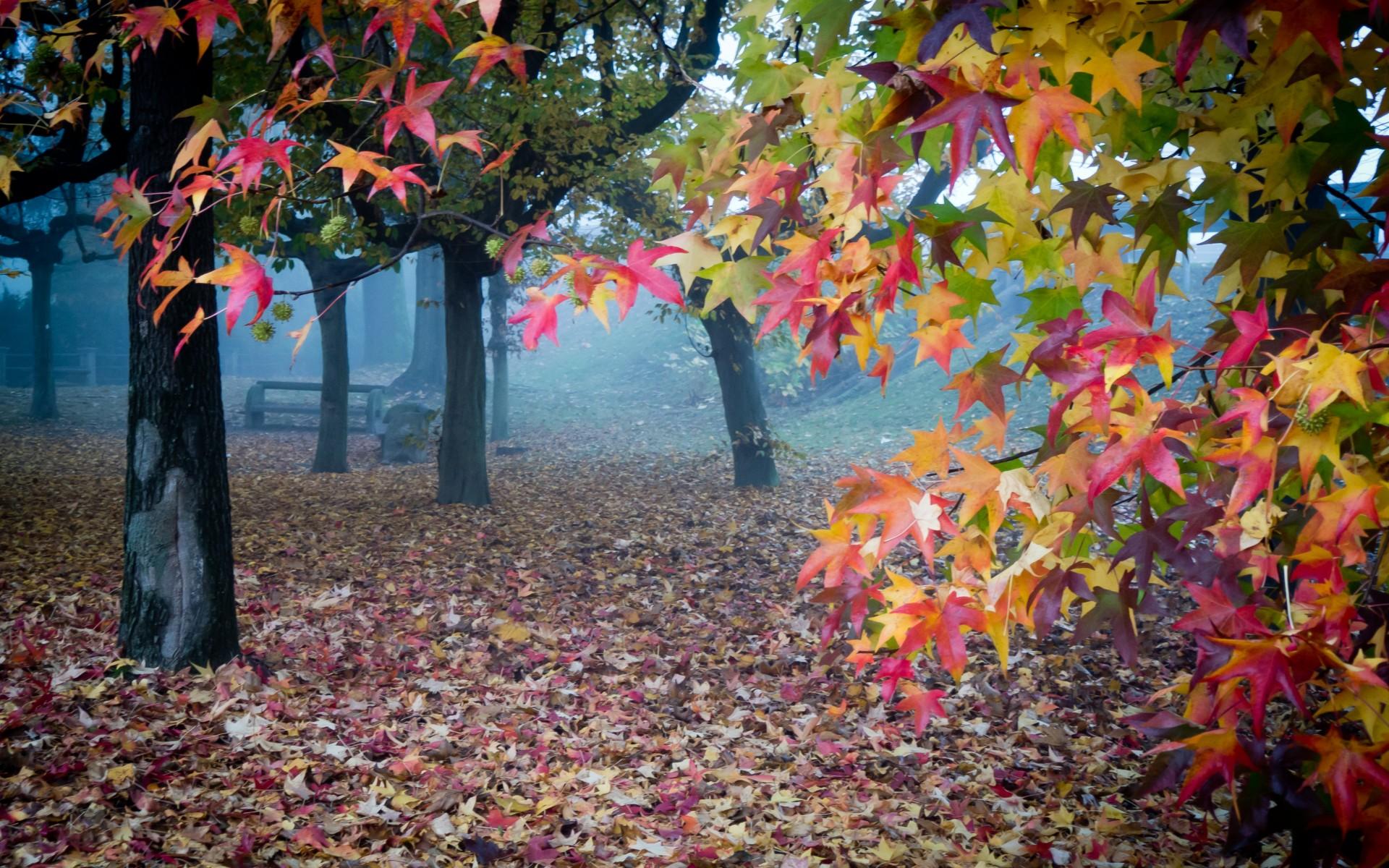 Landscapes Trees Park Bench Autumn Wallpaper 1920x1200