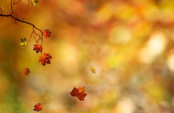 Leaves Branches Autumn Wallpaper 2560x1600 340x220