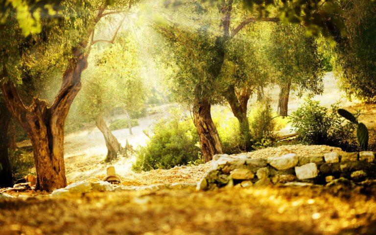 Light Trees Stones Wallpaper 2560x1600 768x480