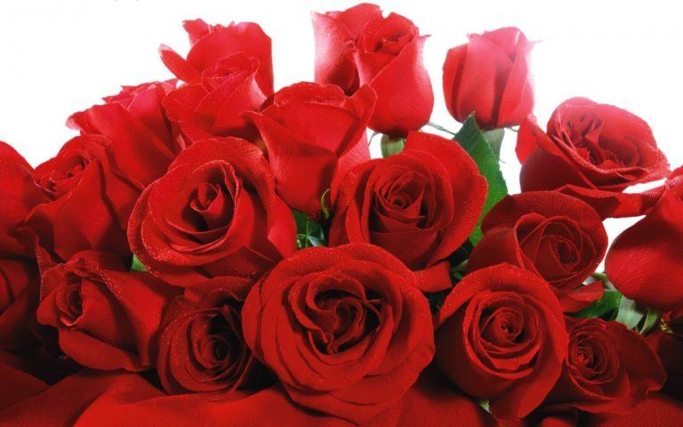 Lovely Red Roses Wallpaper 1680x1050 768x480