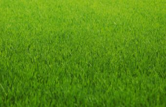 Macro Grass Abstract Green Pattern Wallpaper 1920x1200 340x220