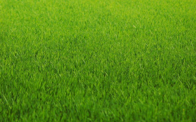 Macro Grass Abstract Green Pattern Wallpaper 1920x1200 768x480