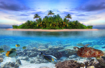 Marine life on a tropical island in the 340x220