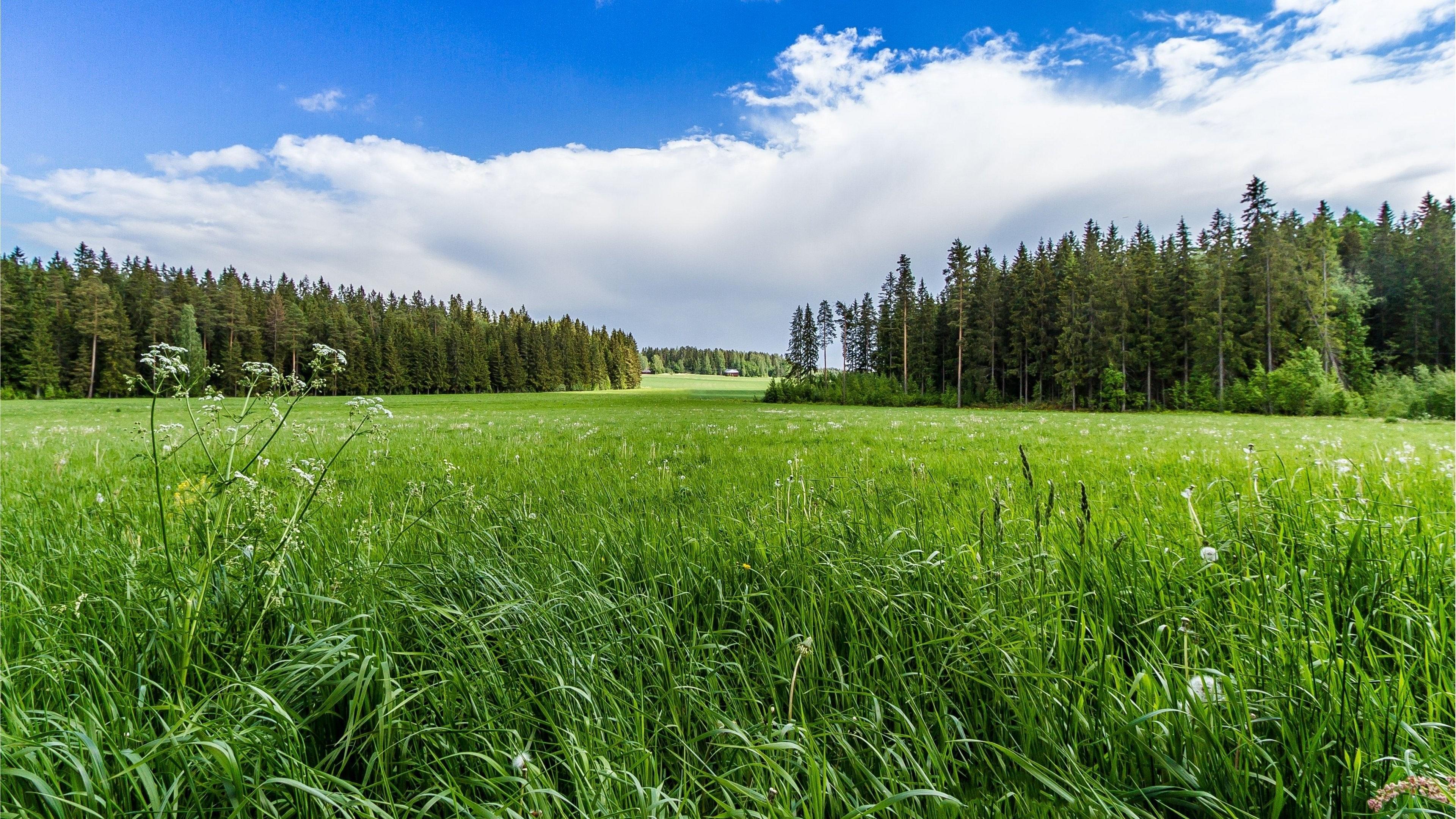 Meadow Forest Sunny Grass Flowers 4K Ultra HD Wallpaper