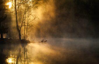 Morning Mist Birds Forest River Wallpaper 3040x2055 340x220