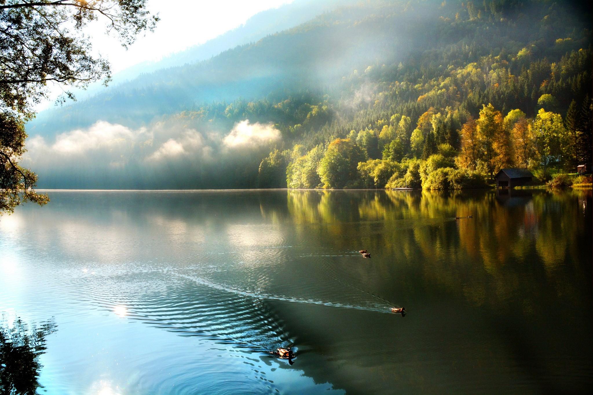 Download Wallpaper Mountain Morning - Morning-Mountain-Lake-Forest-Ducks-Wallpaper-2048x1365  Graphic_52050.jpg