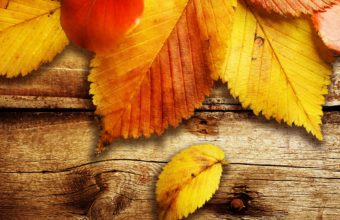 Nature Autumn Season Wood Leaves Wallpaper 2560x1600 340x220