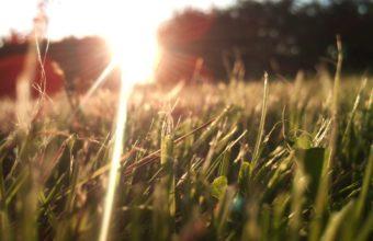 Nature Grass Lens Flare Sunlight Wallpaper 2560x1600 340x220