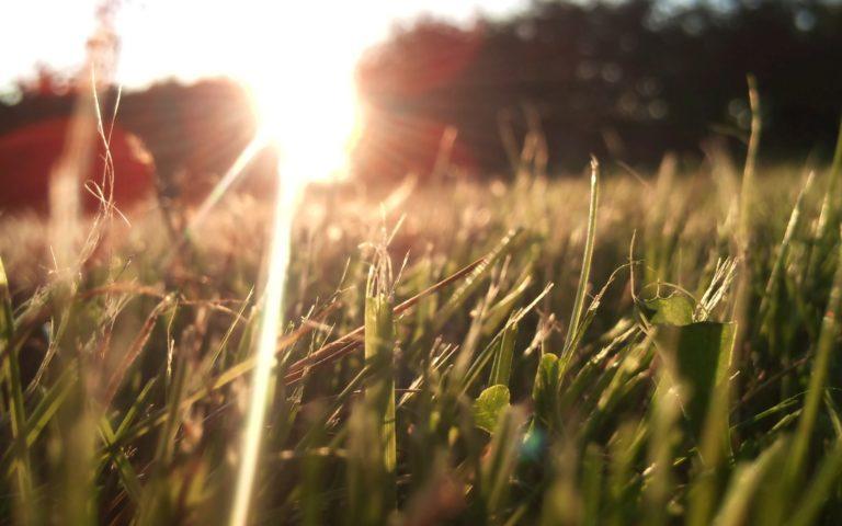Nature Grass Lens Flare Sunlight Wallpaper 2560x1600 768x480
