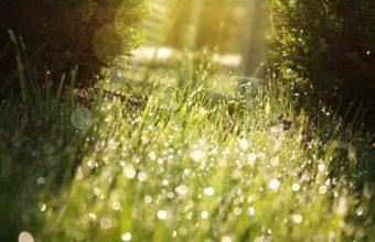 Nature Grass Sunlight Water Drops Wallpaper 2560x1600 340x220