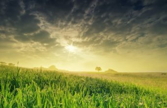 Nature Landscape Field Sun Grass Wallpaper 2560x1600 340x220