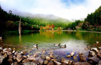 Nature Landscapes Lakes Pond Water Wallpaper 1920x1200 340x220