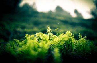 Nature Landscapes Plants Fern Hill Wallpaper 1920x1200 340x220