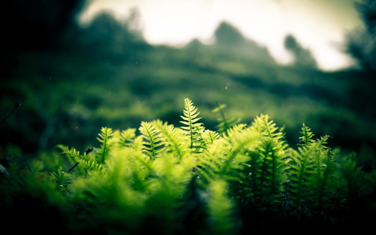 Nature Landscapes Plants Fern Hill Wallpaper 1920x1200 768x480