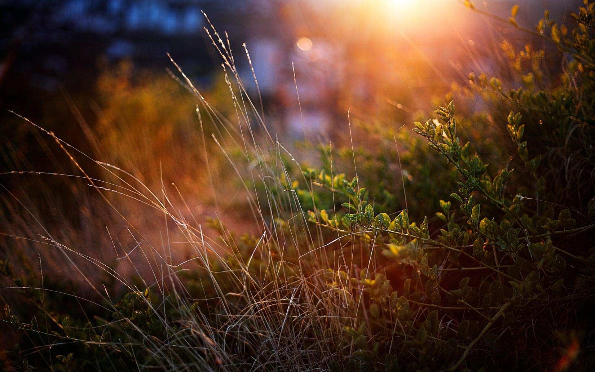Девочка лучи тропинка трава  № 3725995 без смс