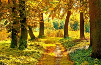 Nature Landscapes Trees Forest Path Wallpaper 1920x1280 340x220